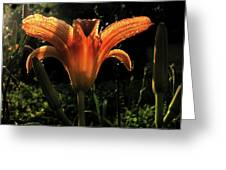 Glowing Day Lily Greeting Card