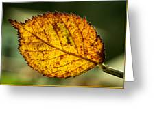 Glowing Fall Leaf Greeting Card