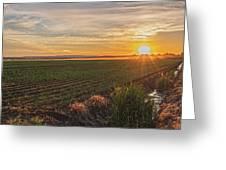 Glowing Fields Of Pine Island Greeting Card