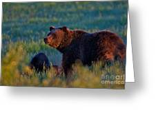 Glowing Grizzly Bear Greeting Card