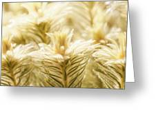 Glowing In Sunlight Golden Plants Greeting Card