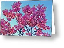 Glowing Magnolia Greeting Card