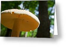 Glowing Mushroom Cap Greeting Card