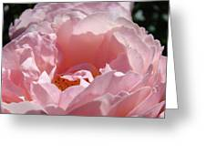 Glowing Pink Rose Flower Giclee Prints Baslee Troutman Greeting Card