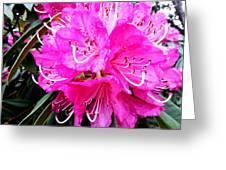 Glowing Pink Greeting Card