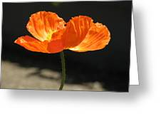 Glowing Poppy Greeting Card