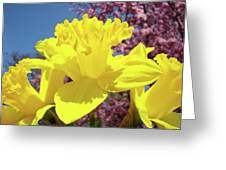 Glowing Yellow Daffodils Art Prints Pink Blossoms Spring Baslee Troutman Greeting Card