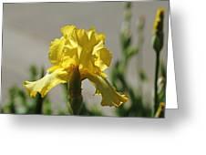 Glowing Yellow Iris Greeting Card