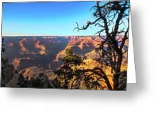Gnarled Juniper On Canyon Rim Greeting Card