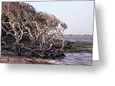 Gnarled Oak Trees Greeting Card