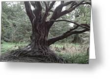 Gnarled Oak Greeting Card