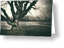 Gnarled Old Tree Greeting Card