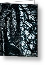 Gnarled Vines Surround A Tree Greeting Card