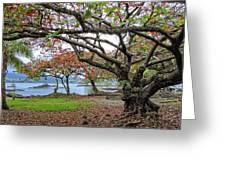 Gnarly Trees Of South Hilo Bay - Hawaii Greeting Card