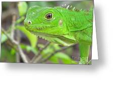 Go Iguana Green 2 Greeting Card