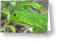 Go Iguana Green Greeting Card