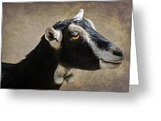 Goat  1 Greeting Card