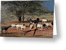 Goat Chase Greeting Card