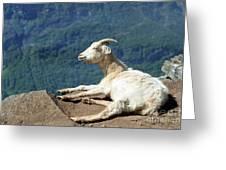 Goat Enjoy The Sun Greeting Card