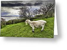 Goat Enjoying The View Greeting Card