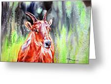 Goat From The Mountain Greeting Card