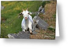 Goat Posing Greeting Card