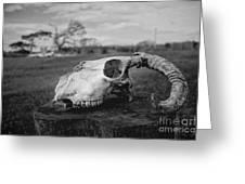 Goat Skull Greeting Card