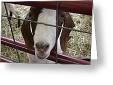 Goat2 Greeting Card