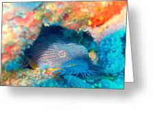 Goatfish Greeting Card