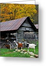 Goats At Rose Briar Farm Greeting Card