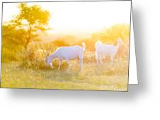 Goats Grazing In Field Greeting Card