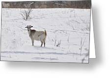 Goats In Snow Greeting Card