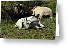 Goats Lying Under A Bush Greeting Card
