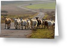 Goats Walking Home Greeting Card