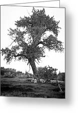 Goddess Tree 2 Greeting Card by Matthew Angelo