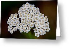 Gods Bridal Bouquet Greeting Card