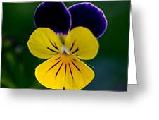 Gods Creation Greeting Card