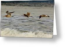 Bar Tailed Godwits Greeting Card