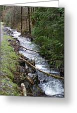 Going Upstream Greeting Card by Laurie Kidd