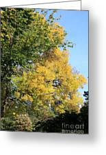 Gold And Green Greeting Card