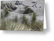 Gold Beach Oregon Beach Grass 15 Greeting Card