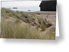 Gold Beach Oregon Beach Grass 24 Greeting Card