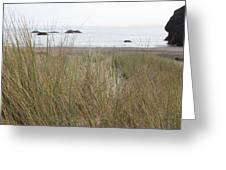 Gold Beach Oregon Beach Grass 7 Greeting Card