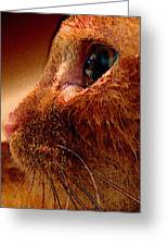 Gold Cat Profile Greeting Card