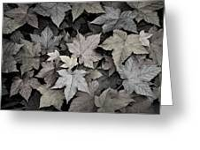 Gold Copper And Silver Leaves 1 Greeting Card