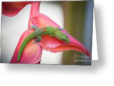 Gold Dust Day Gecko 2 Greeting Card