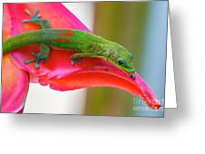 Gold Dust Day Gecko 3 Greeting Card