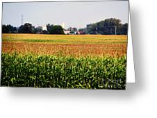 Gold Field Greeting Card