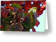Gold Finch 22 Greeting Card