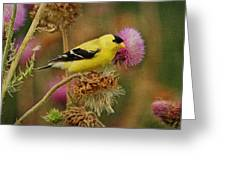 Goldfinch On Thistle Greeting Card